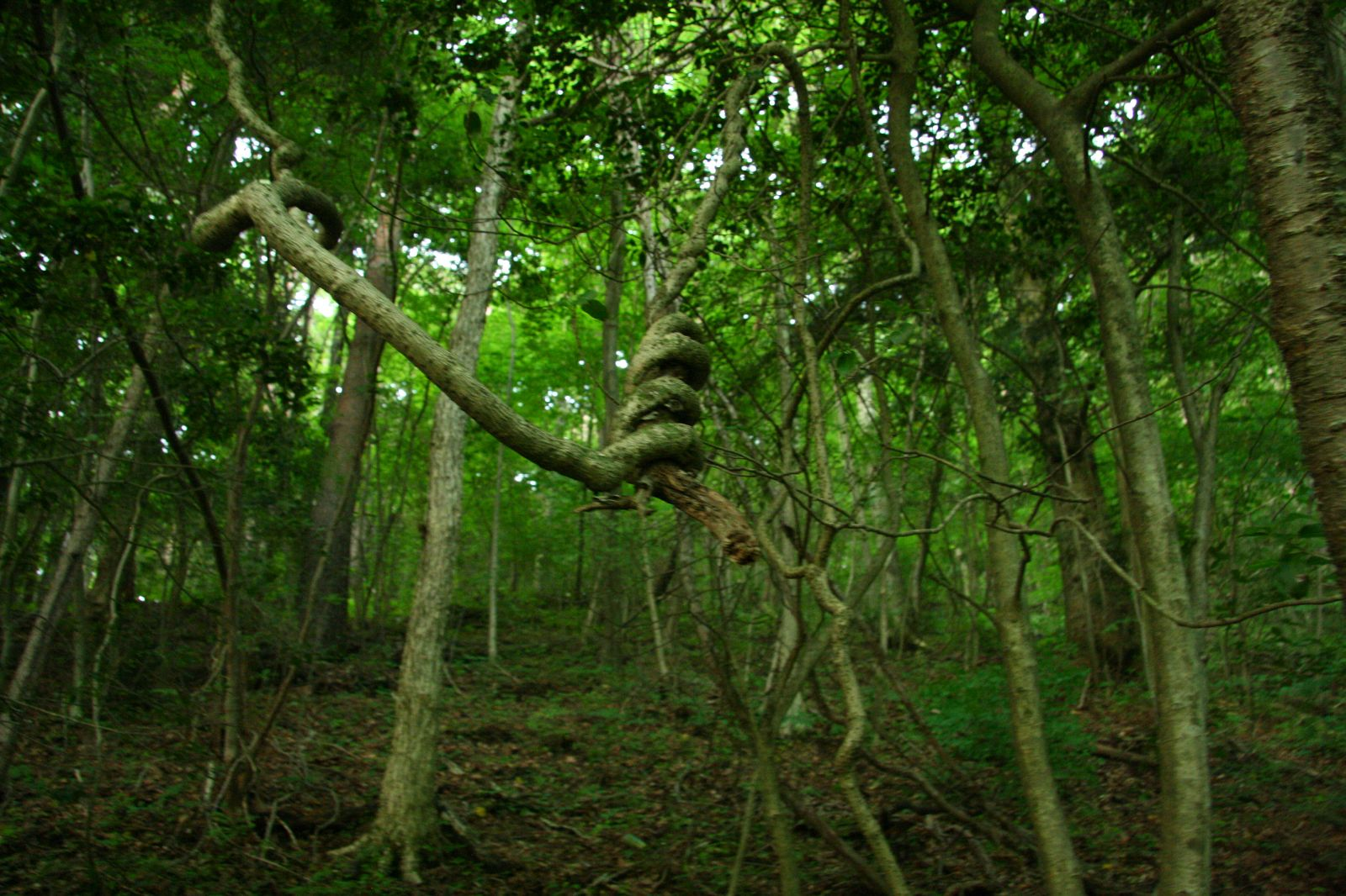 Dark Entry Forest The Most Unique and Mysterious Forests in the World